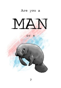manatee illustration